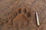 Львиная доля, или Письмо другу – защитнику прав животных