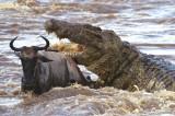 Охота в Африке: обзор