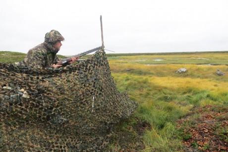 Северное сияние. Из тайги в тундру – осень